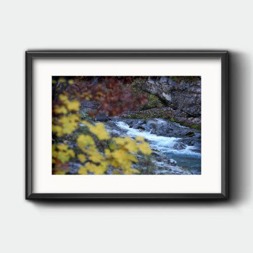Río y árboles en Ordesa